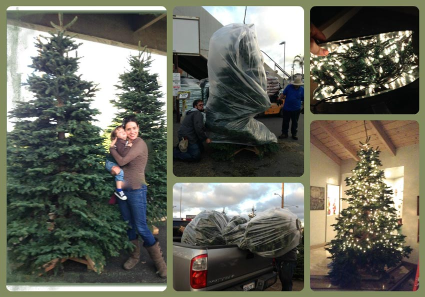 Navidad-Christmas-Arbol-Navideño-escogiendo-el-arbol-1