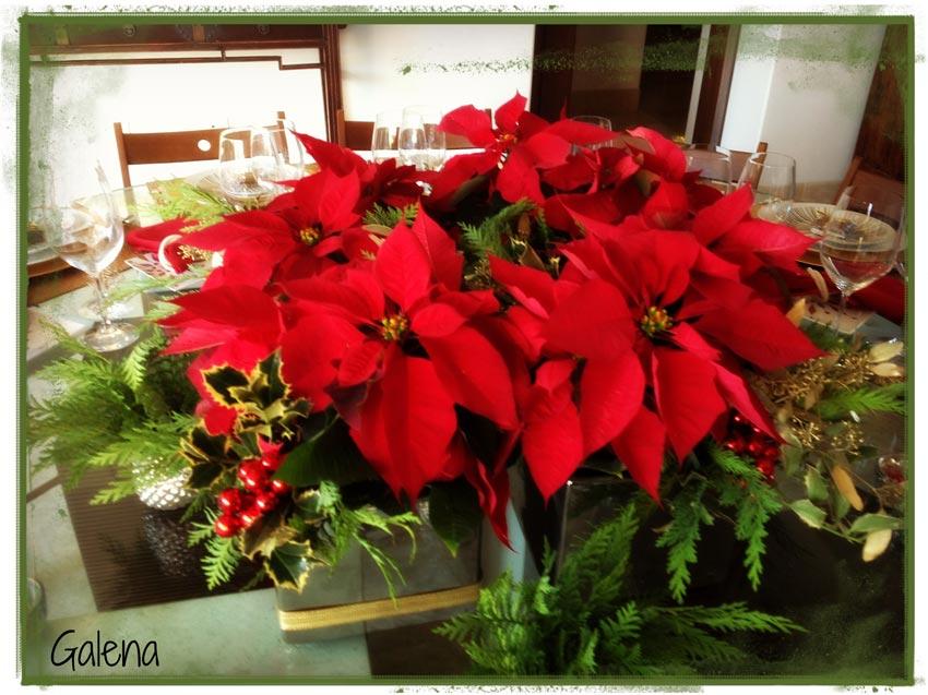 Navidad-Christmas-Nochebuenas-centro-de-mesa-con-nochebuenas