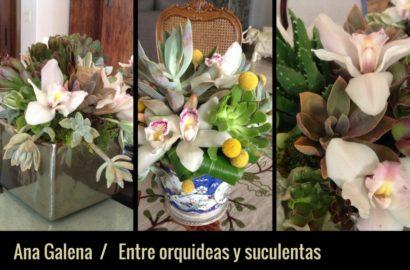 suculentas-y-orquideas