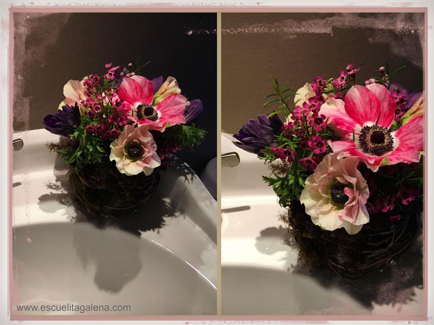 anemonas-de-decoración