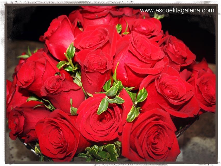 belleza-en-rosas-rojas