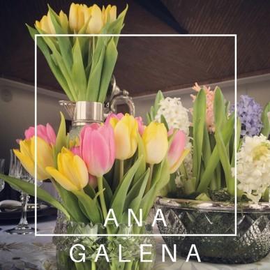 tulipan mesa