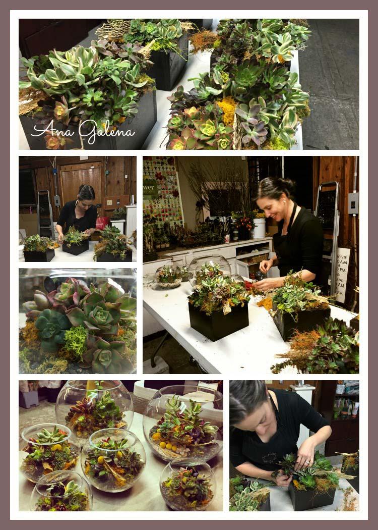 Preparando y haciendo los arreglos de flores con suculentas, tuvieron muchísimo éxito
