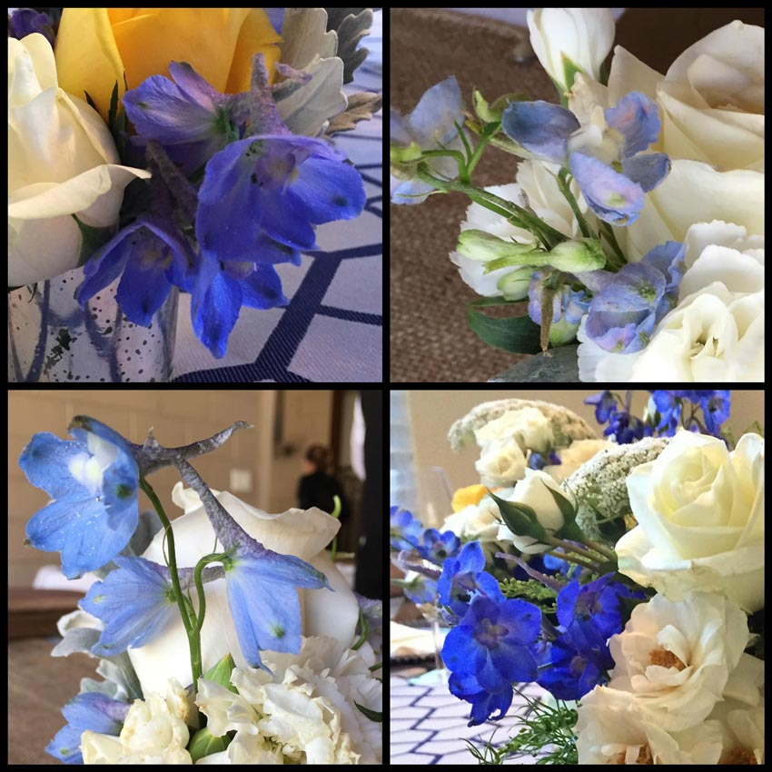aa-delfinio-delphinium-blueflower