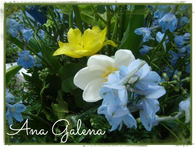 aa-el-delfnio-azul