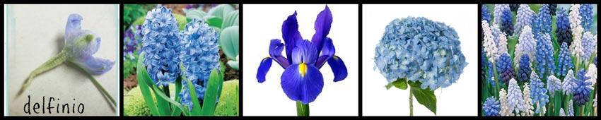aa-flor-en-color-azul