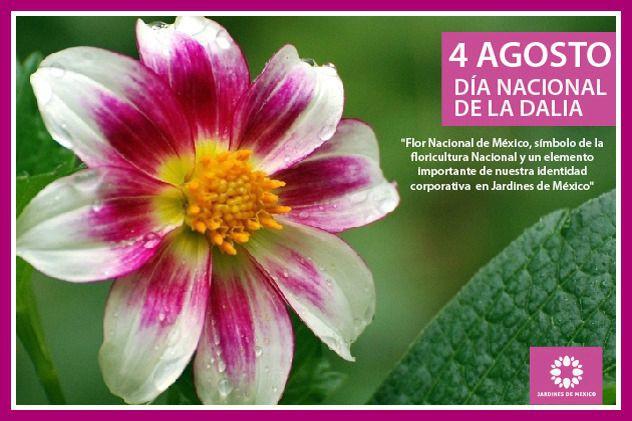 flor-nacional-de-mexico