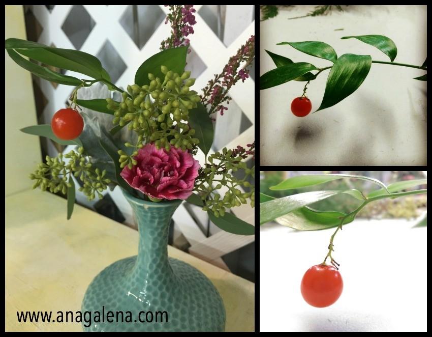 italian ruscus fruit