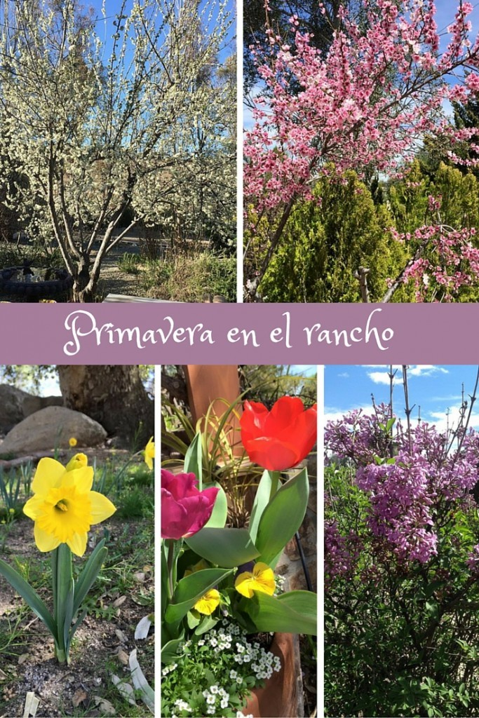 Primavera en el rancho