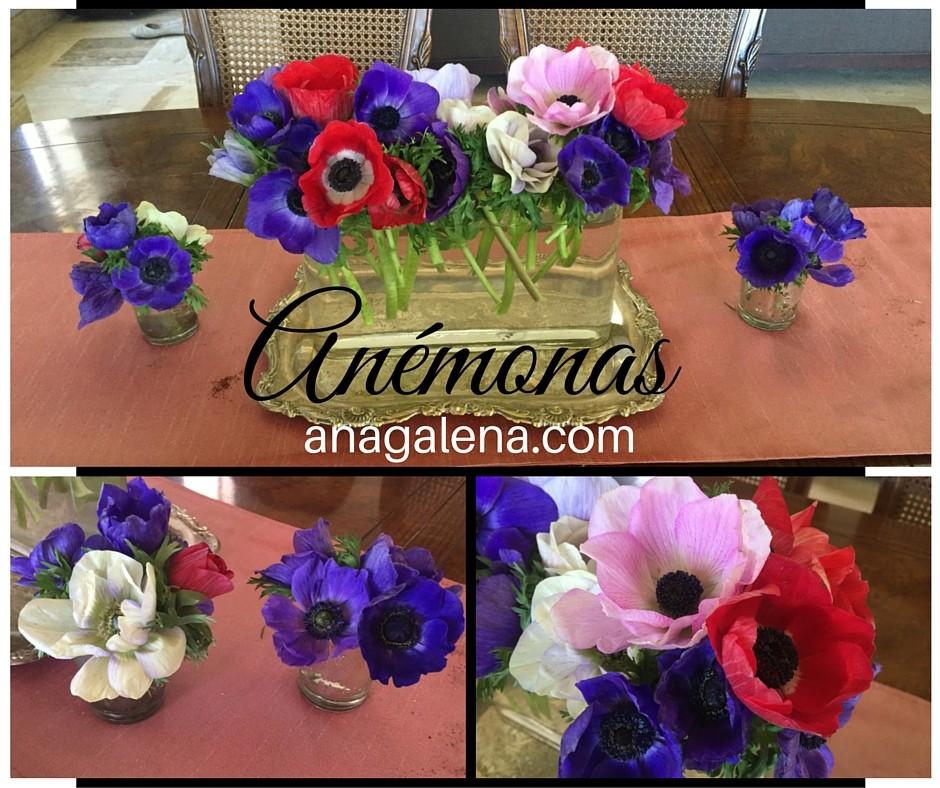 anemonas en vasitos