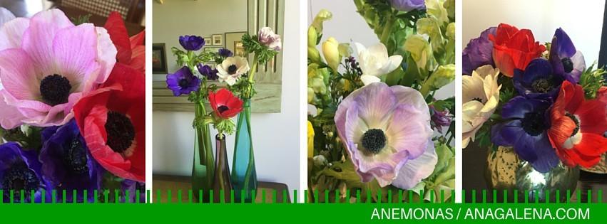 dale click en el link para conocer el mundo de las anémonas