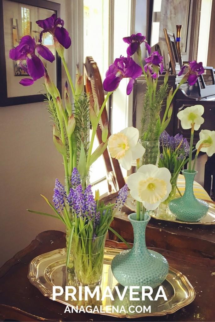 primavera y narcisos