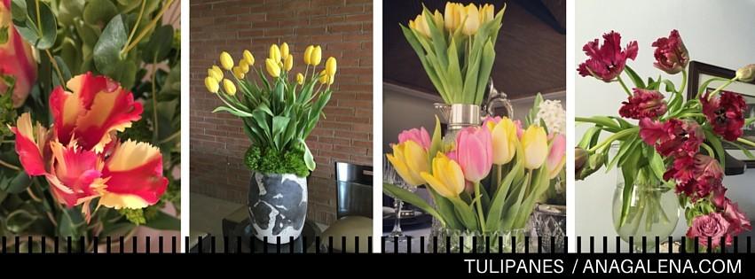 dale click para conocer el mundo de los tulipanes