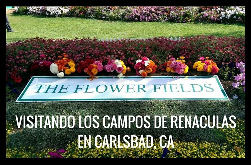 VISITANDO LOS CAMPOS DE RENACULASEN CARLSBAD, CA