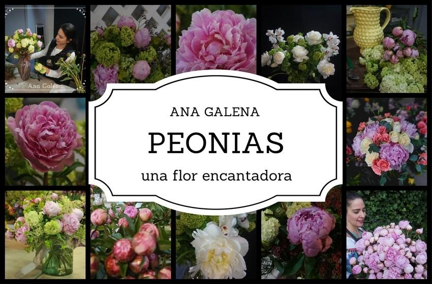 peonias-5