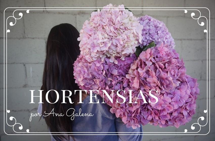 cuidados-para-hortensias