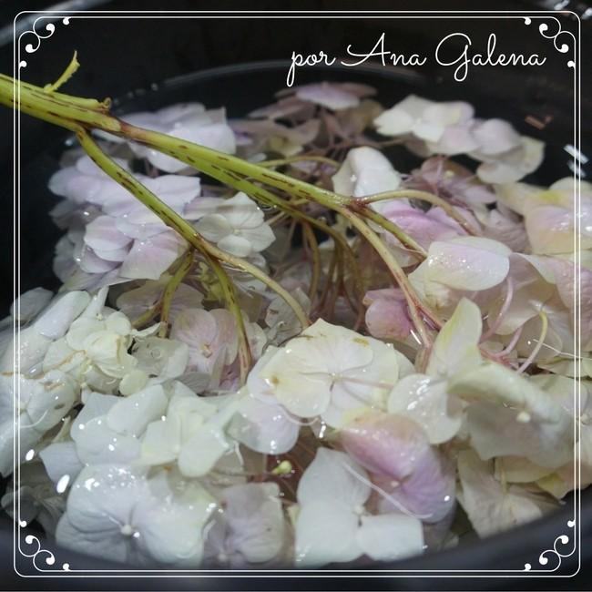 hortensia-sumergida-en-agua