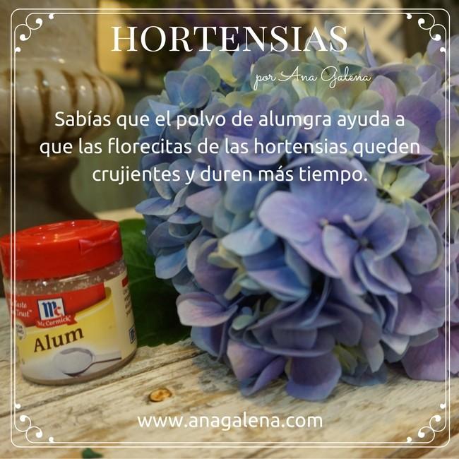 hortensias-y-que-duren