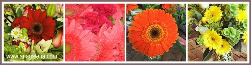 aa-color-de-las-gerberas
