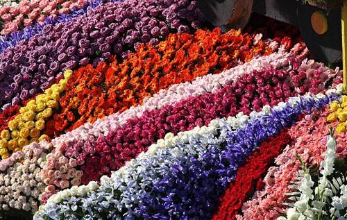 flores-rb