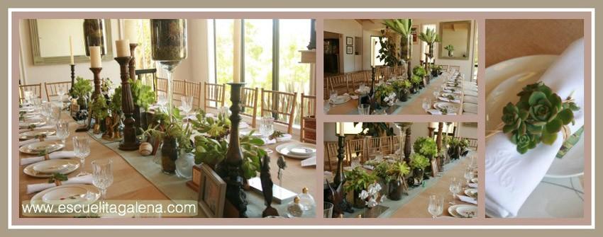 suculentas-para-decorar-la-mesa