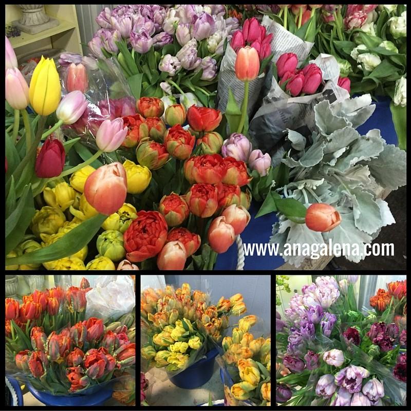 tulipanes en todos los colores