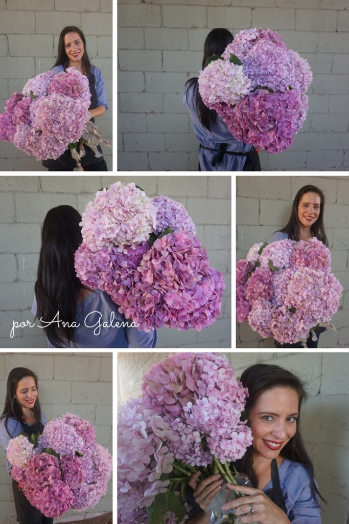 hortensias-rosas