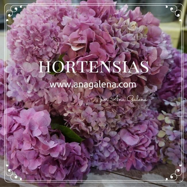 sobre-las-hortensias