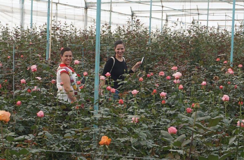 Coatepec Harinas, donde se cultivan las mejores rosas de Mexico